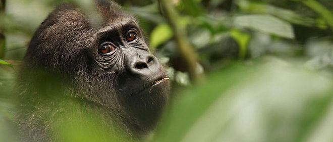 """Pour le premier épisode de """"J'ai marché sur la Terre"""", Mathieu Vidard explore la forêt équatoriale du Gabon © SIPA"""
