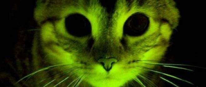 La nuit, tous les chats sont gris, sauf ceux nés après une thérapie génique.