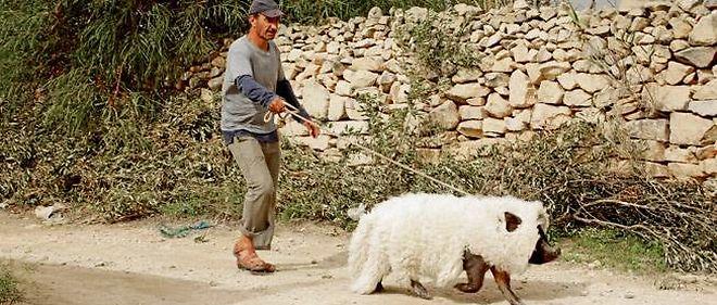 "Sasson Gabai dans ""Le cochon de Gaza"", un film de Sylvain Estibal."