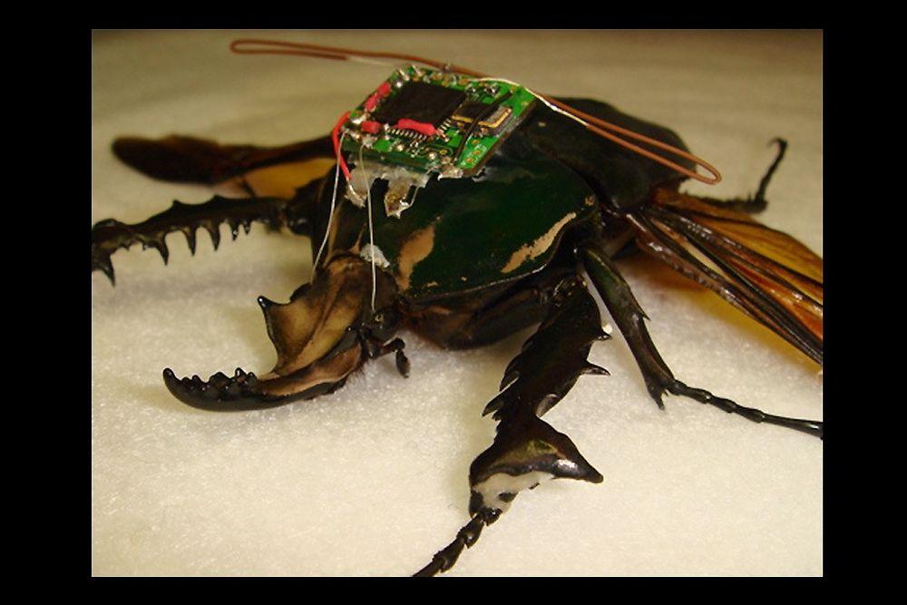 Insecte télécommandé