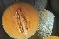 On reconnaît un melon mûr par sa tige qui commence à se détacher , par son poids et son odeur.  ©ANGOT