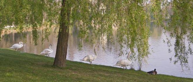 Sur les bords du lac Daumesnil, au bois de Vincennes.