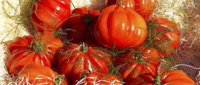 Les tomates sont particulièrement riches en lycopène (antioxydant) et en vitamine C.