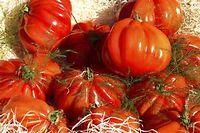 Les tomates sont particulièrement riches en lycopène (anti-oxydant) et en vitamine C ©ANGOT