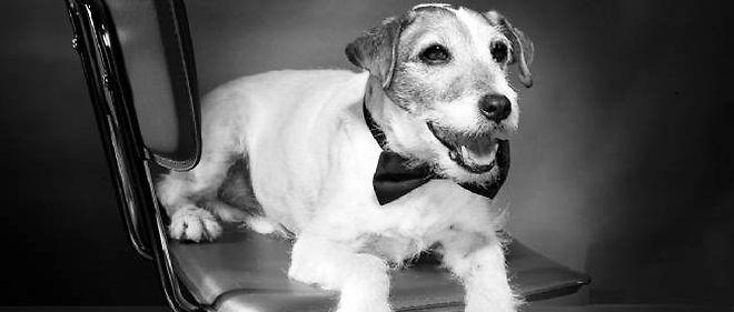 """Uggie, le chien partenaire de Jean Dujardin dans le film """"The Artist""""."""