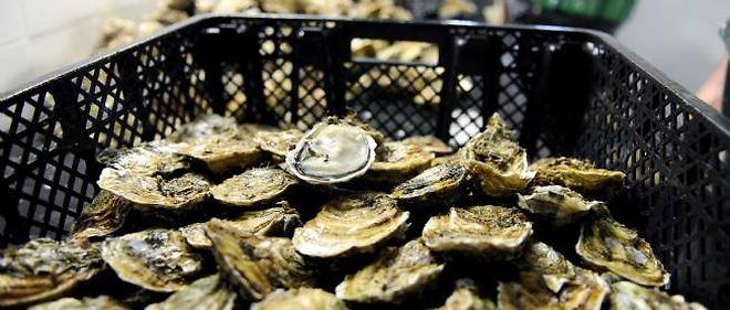 Les huitres triploïdes sonneront-elles la fin des huîtres naturelles ? (Photo d'illustration).