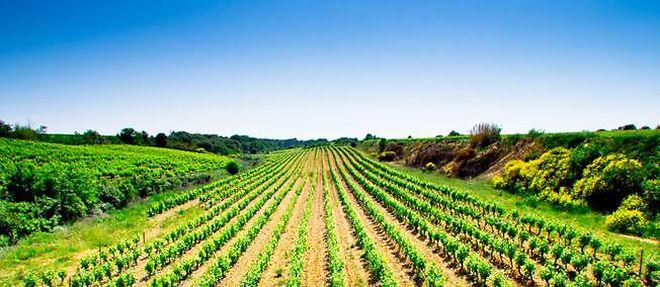 Vignoble du Languedoc-Roussillon ©Florian Villeseche - Fotolia