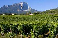 Vignoble de Savoie ©Aurelien Antoine - Fotolia