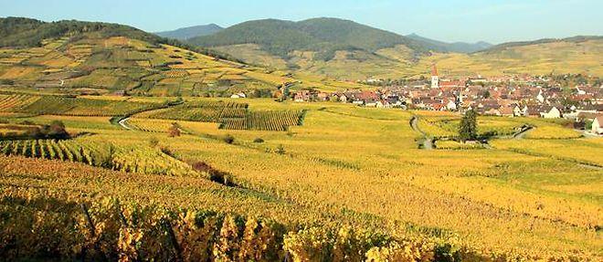 Vignoble alsacien ©Iso - Fotolia