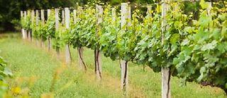 Vignoble de Champagne ©Oksix - fotolia