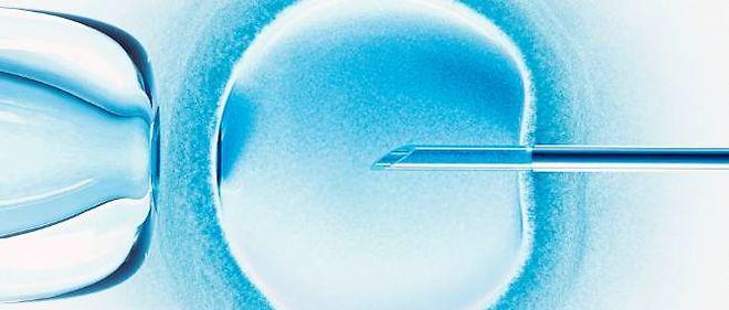 Une fécondation in vitro (photo d'illustration).