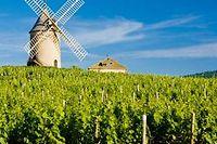 Moulin à vent dans le vignoble du Beaujolais ©PHB CZ - Fotolia