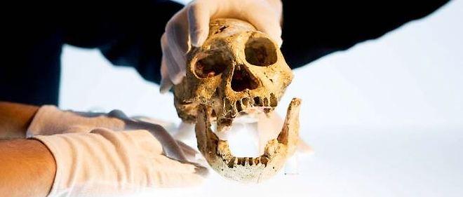 comparer les techniques de datation des fossiles