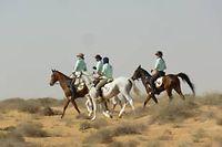 Les cavaliers de l'équipe Valhoria .