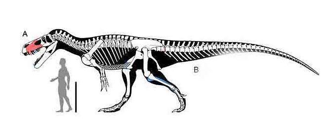 Le plus grand dinosaure carnivore d'Europe identifié - Page 2