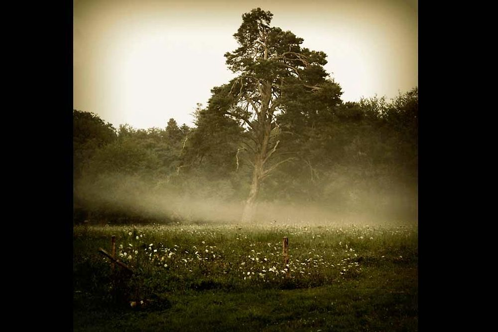 """""""Solitude matinale"""" de Florence Notté"""