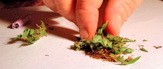 Le cannabis tue moins que les autres drogues ou que certains medicaments.