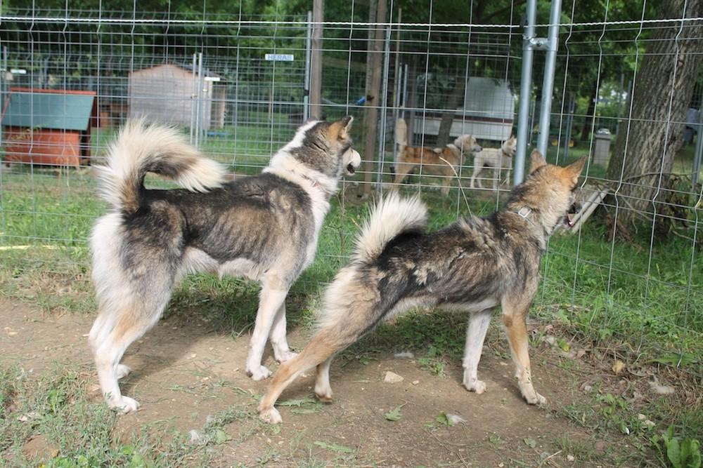 Les chiens recueillis par le refuge Eden valley ©  Page Facebook de Eden Valley