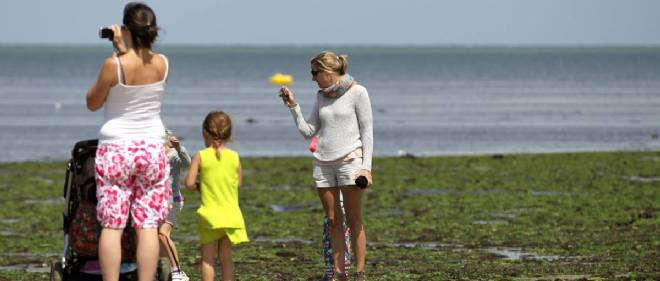 Une étude a été commandée par le conseil général du Calvados pour connaître l'origine des algues vertes, qui touchent désormais les plages normandes, comme ici, à Grandcamp-Maisy.