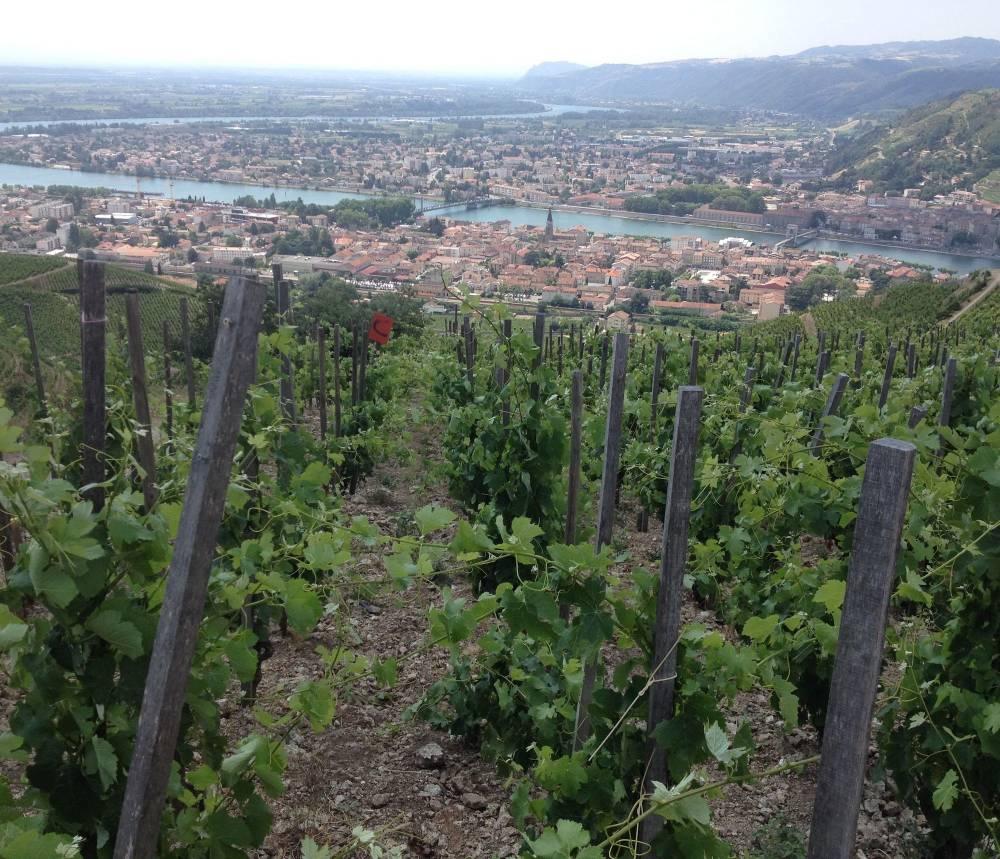 Vignes de l'appellation Hermitage surplombant le Rhône. ©  DR