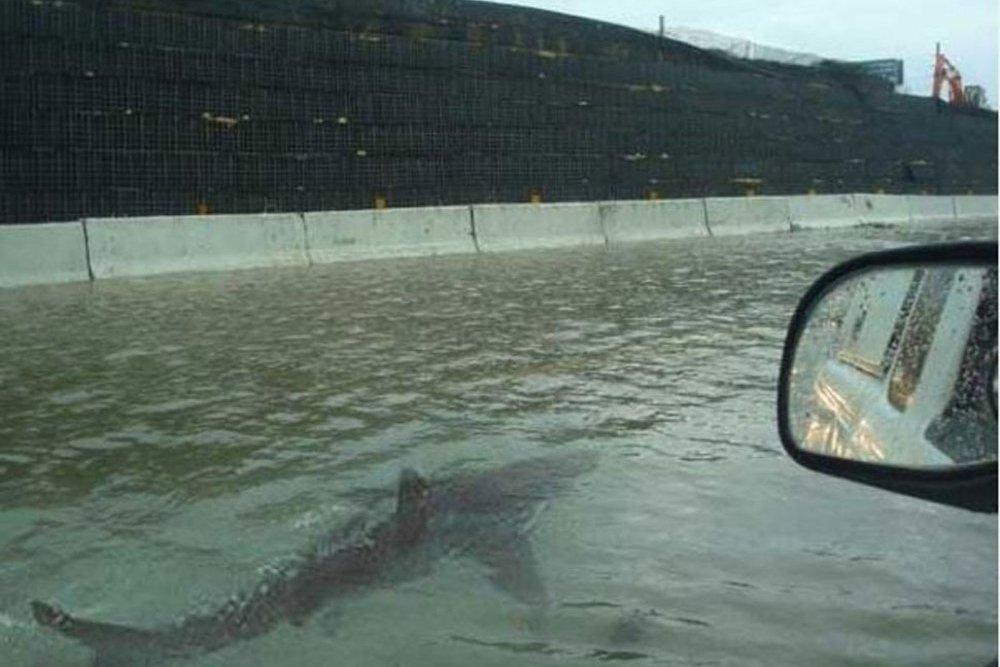 Un requin dans la ville