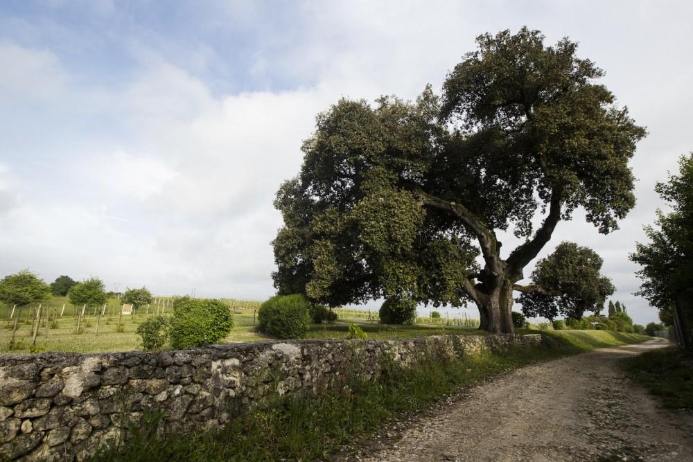 Choisi par le public, le chêne dit de François Ier est un des trésors cachés de la vallée de l'Antenne, en Poitou-Charentes. © Hellio - Van Ingen Terre Sauvage