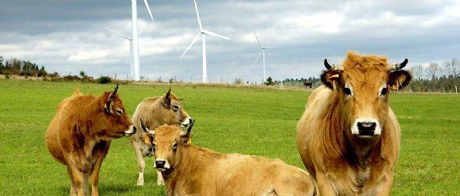 Les députés ont choisi : les vaches françaises ne vont pas contribuer à tenir nos engagements sur la baisse de nos gaz à effet de serre.