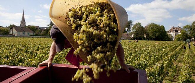 Vendanges en Bourgogne.