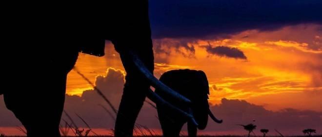 Kenya : le tourisme bute sur le risque terroriste