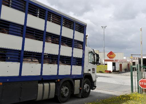 Arrivée aux abattoirs Gad d'un camion transportant des porcs le 11 août 2014 à Josselin dans le Morbihan © Miguel Medina AFP/Archives