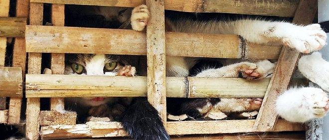 """Une pétition en ligne, qui a recueilli plus de 23 000 signatures, exhorte le Vietnam à """"changer ses politiques de manipulation des animaux""""."""