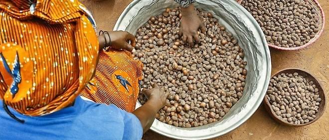 Traitement de l'huile et du beurre de karité à Bobo Dioulasso, au Burkina Faso.