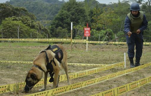 Un soldat et un chien renifleur à la recherche de mines dans le département colombien d'Antioquia, le 3 mars 2015 © Raul Arboleda AFP