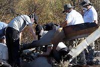 Les enquêteurs français du Bureau d'enquêtes et analyses près de la carcasse de l'un des hélicoptères impliqués dans le crash. ©JUAN MABROMATA