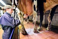 Les producteurs de lait craignent de d'être encore plus exposés à une éventuelle baisse des prix du lait après la disparition des quotas européens. ©GEORGES GOBET