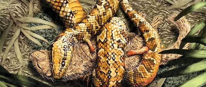 Représentation artistique du Tetrapodophis amplectus, serpent à quattre pattes.