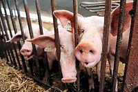 Les principales filières de l'élevage français sont en crise (photo d'illustration). ©DENIS CHARLET