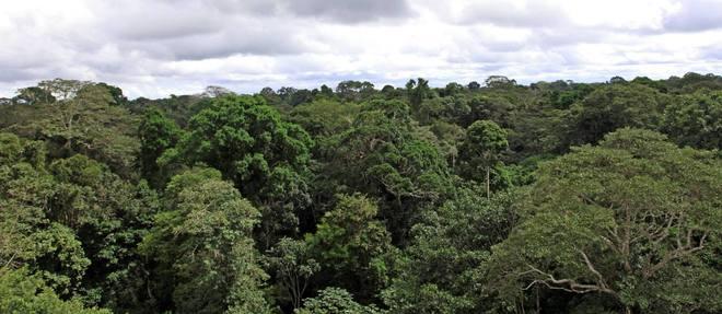 La bonne santé des forêts tropicales, comme celle d'Amazonie, est garante de l'équilibre climatique planétaire.