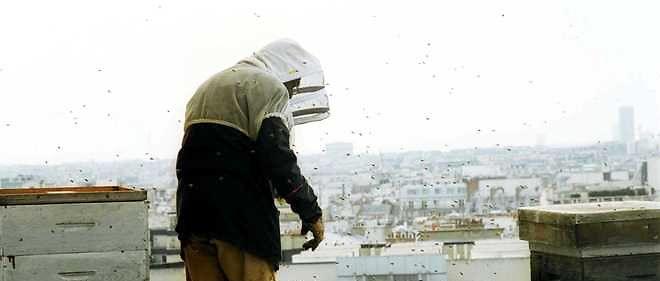 Les ruches des toits de l'Opéra Garnier.