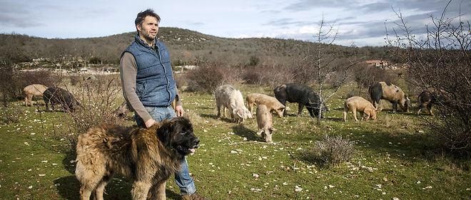 Nicolas Brahic et son chien Loukoum, un Leonberg qui veille sur le domaine de 250 hectares, à Saint-Maurice-de-Navacelles, où s'ébattent en liberté les cochonnets du Larzac.