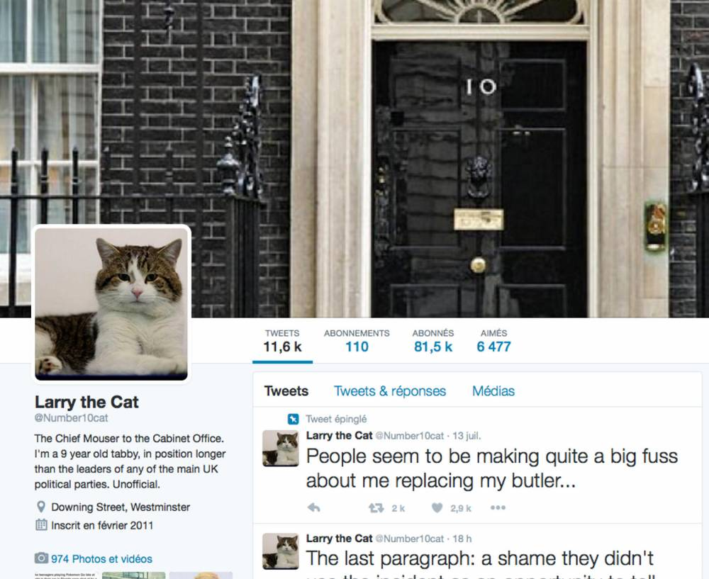 Twitter Larry the cat ©  Capture d'écran Twitter