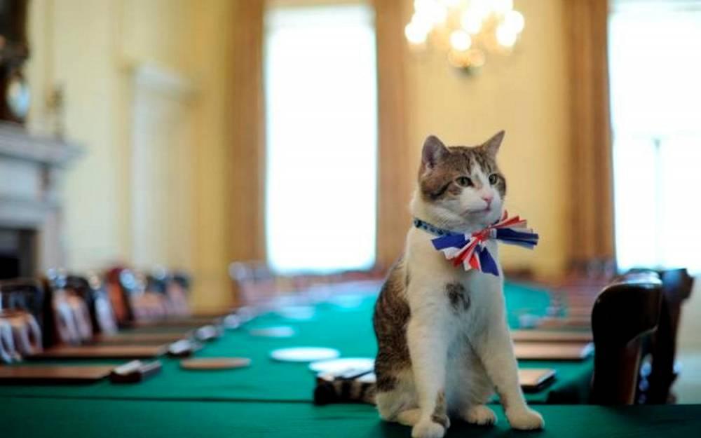 Larry the cat  © Ben Stansall  AFP