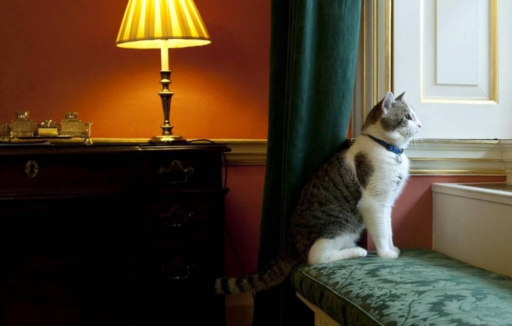 Larry the cat © Marc Large AFP