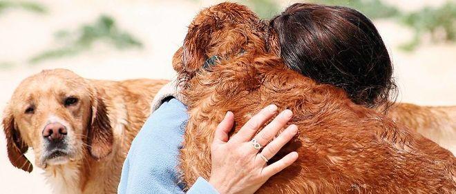 Selon une étude hongroise, le cerveau canin distingue les mots et les intonations.