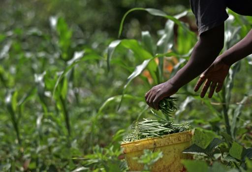 En Afrique il y a encore des millions d'hectares de terres incultes © TONY KARUMBA AFP/Archives