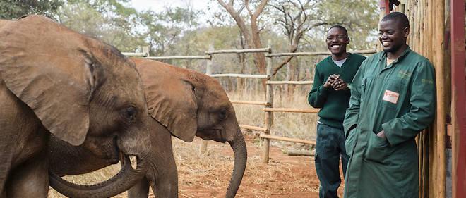 Des gardiens d'éléphants à la nurserie pour éléphants de Lilayi à Lusaka, en Zambie.