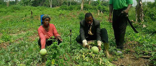 Des agriculteurs camerounais dans leur domaine agricole en 2013.