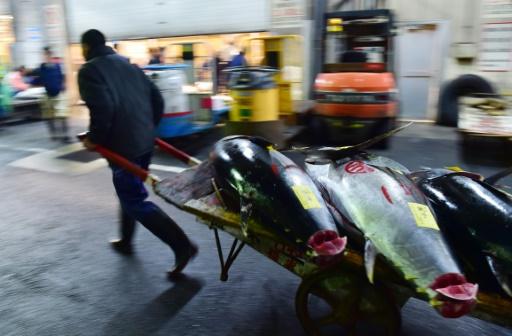 Un acheteur quitte le marché aux poissons  Tsukiji à Tokyo avec sa marchandise, le 5 janvier 2016 © YOSHIKAZU TSUNO AFP/Archives