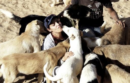 Un bénévole syrien s'occupe de chiens en détresse dans un refuge fondé par une association, à Sahnaya, près de Damas, le 18 octobre 2016 © LOUAI BESHARA AFP