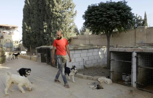 Un bénévole syrien membre d'une association d'aide aux animaux s'occupe de chiens dans un refuge près de Damas, à Sahnaya, le 18 octobre 2016 © LOUAI BESHARA AFP
